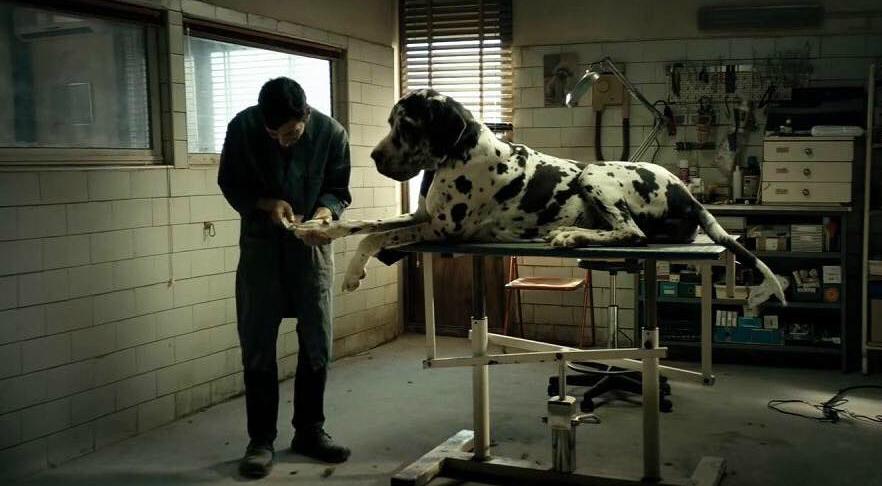 dogman8 - Dogman: la discesa agli inferi di un uomo piccolo piccolo
